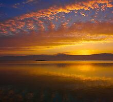 Dawn Rising in the Dead Sea  by Suzanne Kirstein
