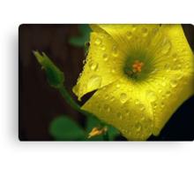 "Said Oxalis the Edible--""I'm Not Afraid of Rain..."" Canvas Print"