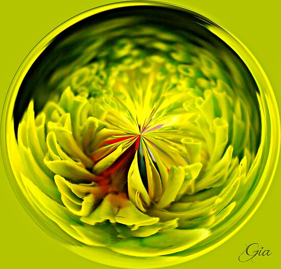 """Zinnia"" by Gail Jones"