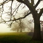 Being with Trees - Rich Miller calendar 10 by heidiannemorris