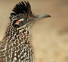 Roadrunner, Meep Meep  by NatureGreeting Cards ©ccwri