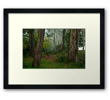 Bushland Solitude #2  - Mount Wilson - NSW  - The HDR Experience Framed Print