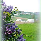 The Farm through Lilacs and Red Bud Trees by TrendleEllwood