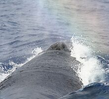 Humpback Blow by Katie Grove-Velasquez