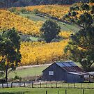 Hay Shed, Cradoc, Tasmania #3 by Chris Cobern
