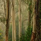 Guardians In The Mist- Mount Wilson, NSW Australia - The HDR Experience by Philip Johnson
