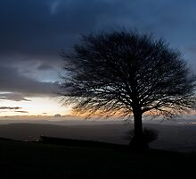 Hilltop tree at Dawn by peteton