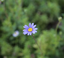 Itty bitty blue by Melani