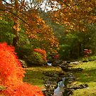 Autumn Play at Leura by Michael Matthews