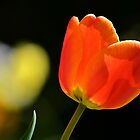 TULIP by relayer51