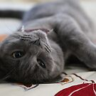 The contented kitten by Melani