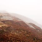 Signal Hill in the fog, Newfoundland. by FER737NG
