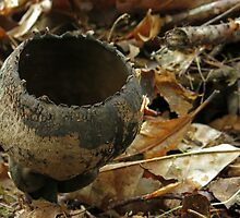 Devil's Urn by Lynn Gedeon