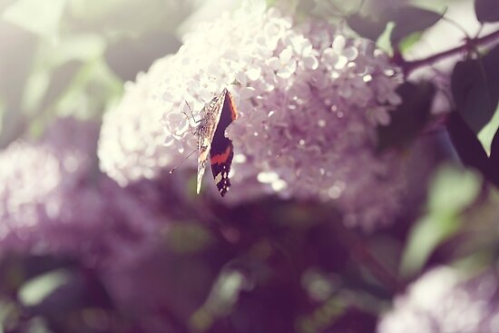 butterfly on lilac by passerby2