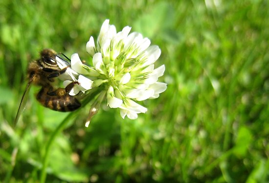 The bee (2) by LeJour