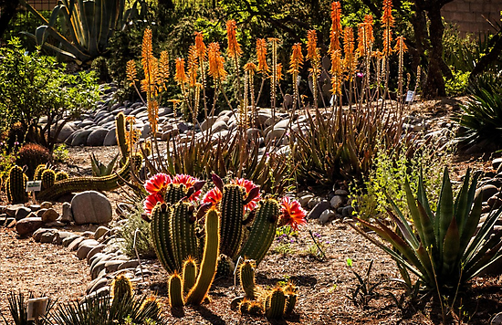 Early Morning in the Arid Garden by Linda Gregory