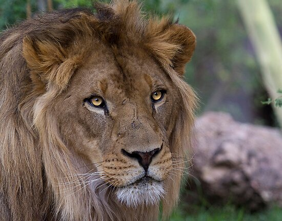 Majestic Beauty by Sue  Cullumber