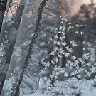 Frost on window. Sunset. by UpNorthPhoto