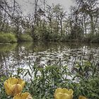 Tulips by the Lake by iangmclean