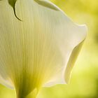 Calla Lily by Marian Grayson