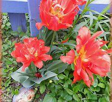 Poppy Tulips  by TrendleEllwood