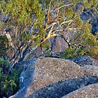 Mt Buffalo Sunrise II by Harry Oldmeadow