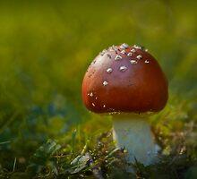 Magic Mushroom by Dianne English