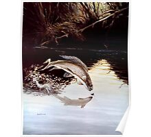 Grayling Leaping Out Of The Water Poster