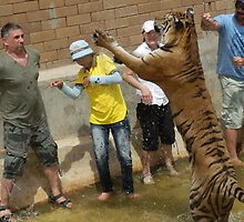 leaping tiger crouching human by gruntpig