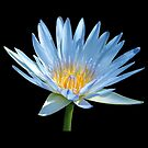 Blue Water Lily by Sandy1949