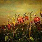 Fritillaries 2013 by ajgosling