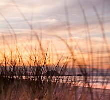 through the grasses by Anne Scantlebury