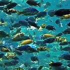 Something Fishy!!! by John  Kapusta