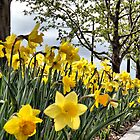 Spring in Chelsea by joan warburton