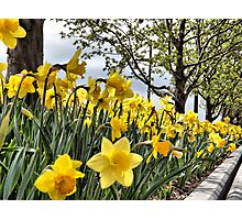 Spring in Chelsea Photographic Print