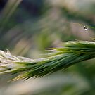 Grass and morning dew by Al Williscroft