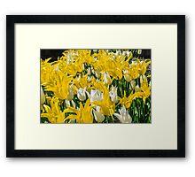 Rays of Spring Tulips Framed Print