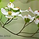 Dogwood 9281 by KarenDinan