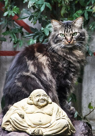 Buddha Cat! by heatherfriedman