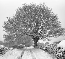Winter Farm Lane Tree by Mick Gosling