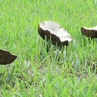 Mushroom Satellite Dishes by AuntDot