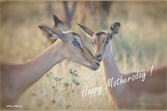 HAPPY MOTHERSDAY! - GELUKKIGE MOEDERSDAG ! by Magaret Meintjes