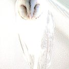 Barn Owl by Holly Kempe