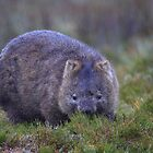 The King of Cradle Mountain  by Donovan wilson