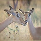 HAPPY MOTHERSDAY!  by Magaret Meintjes