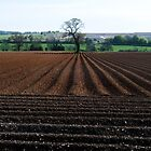 Patterned Potato Field in Yorkshire by Richard Flint