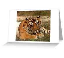 Lazy Tiger Greeting Card