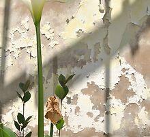 Arum Lilly 3 - Death & Life by Eldon Mason