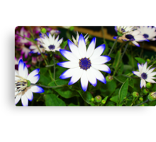 Blue Flower Print Canvas Print