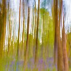 Bluebell Impressions by Paul Richards